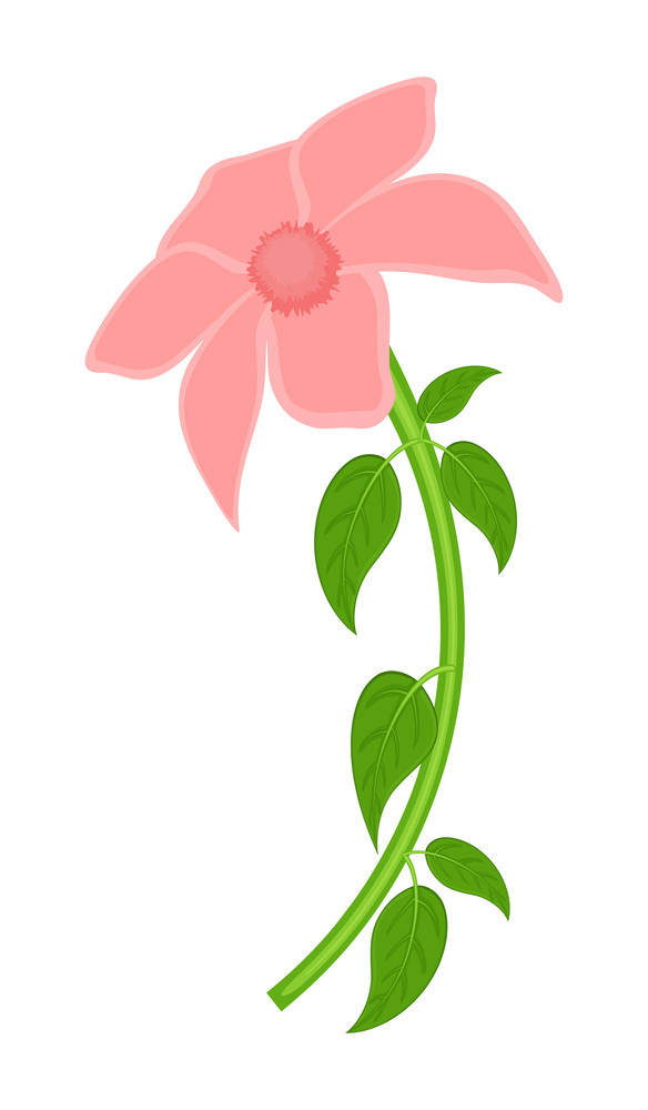Pink Daisy Illustration