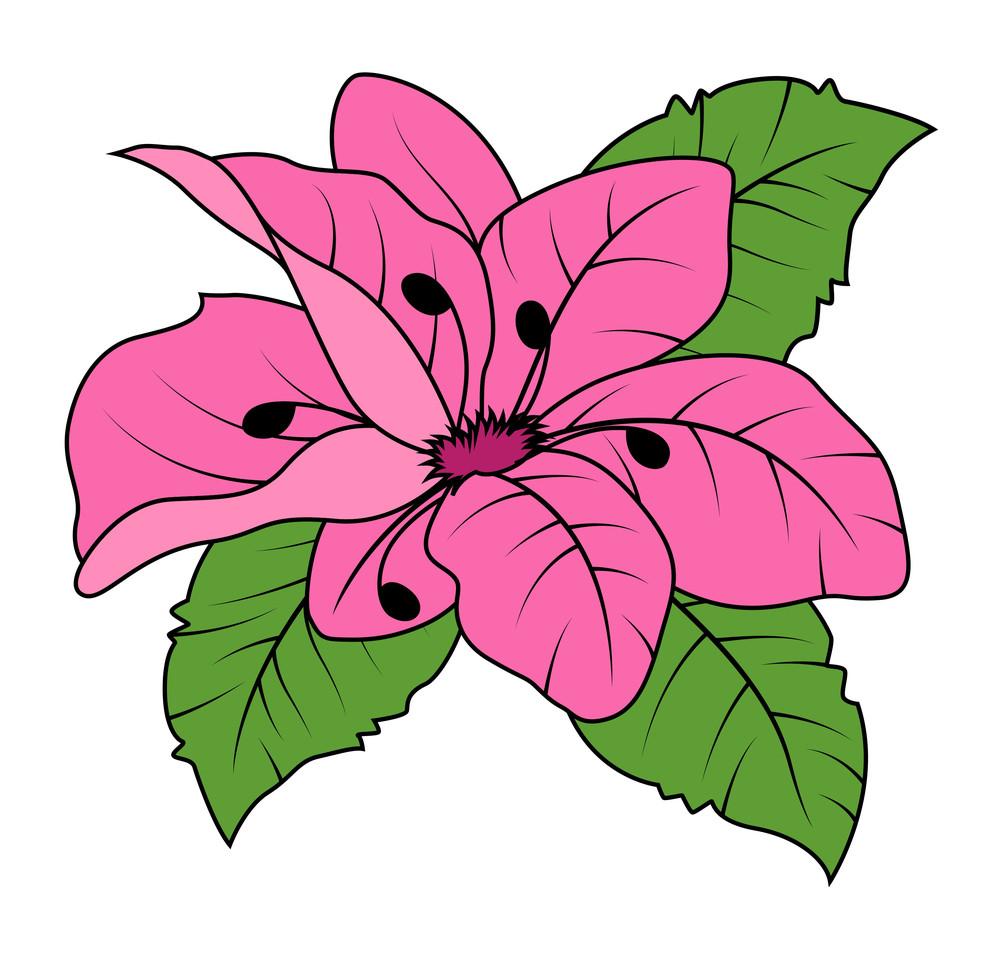 Pink Daisy Vector Illustration