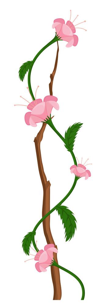 Pink Flower Branch Vector