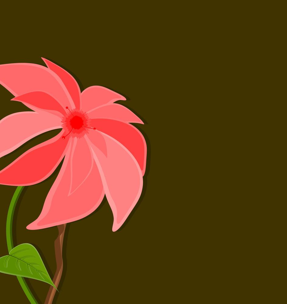 Pink Flower Close Up Banner