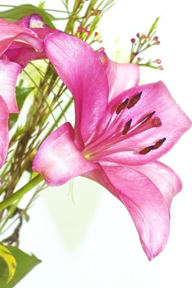 Pink Flower Closeup 188