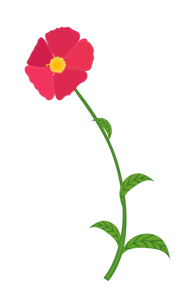 Pink Flower Drawing Element
