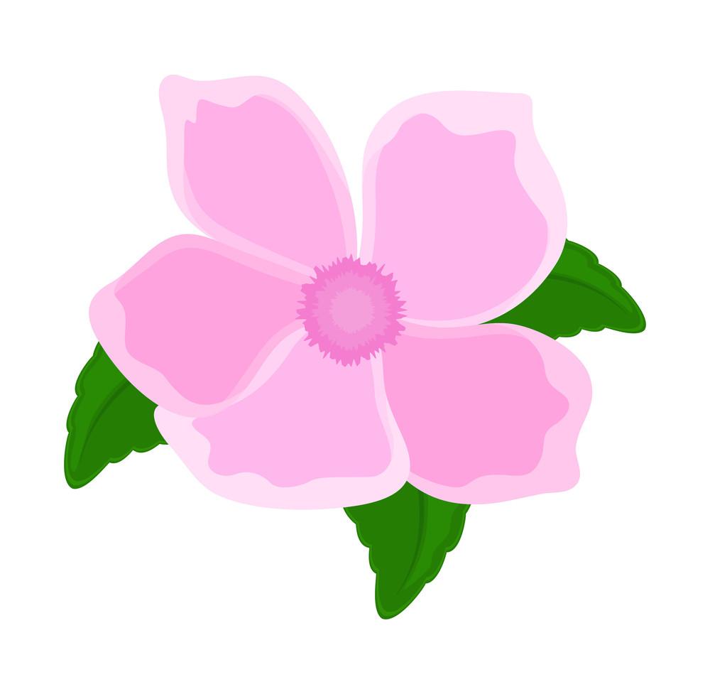 Pink Flower Petals Design Royalty Free Stock Image Storyblocks