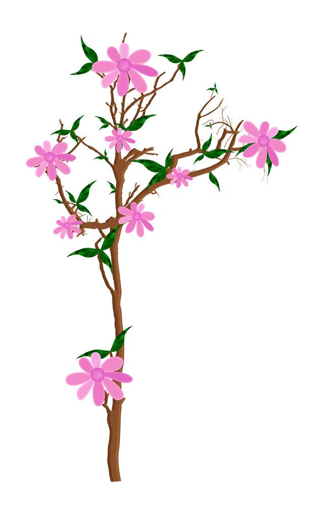 Pink Flowers Plant Illustration