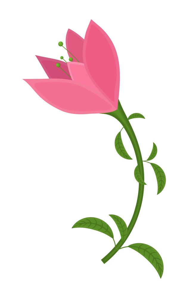 Pink Tulip Flower Design