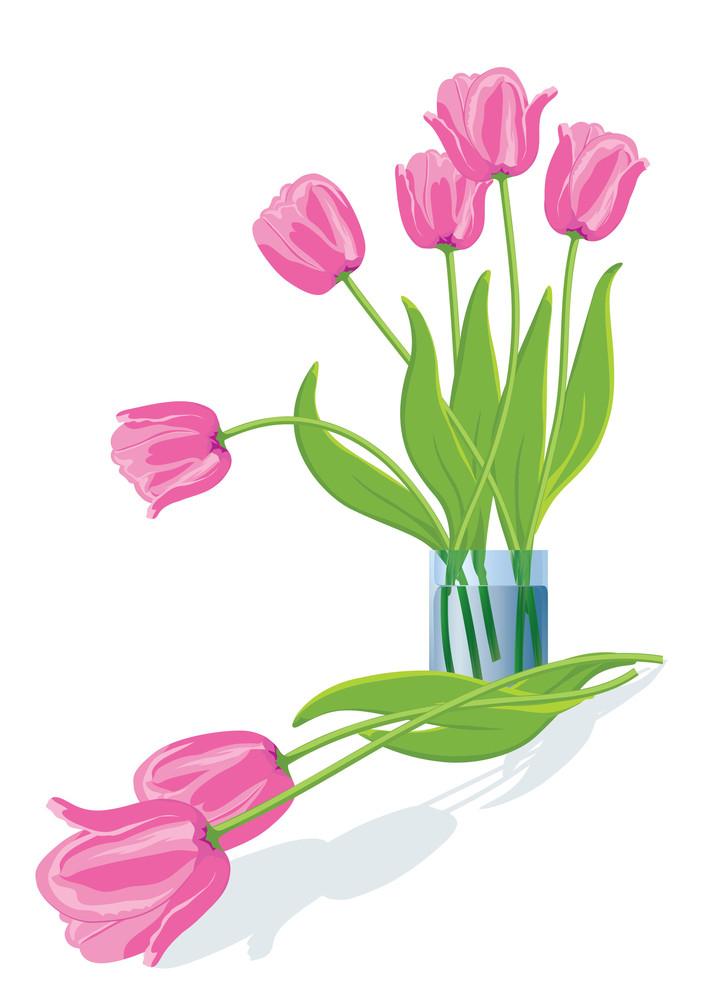 Pink Tulips. Vector Illustration