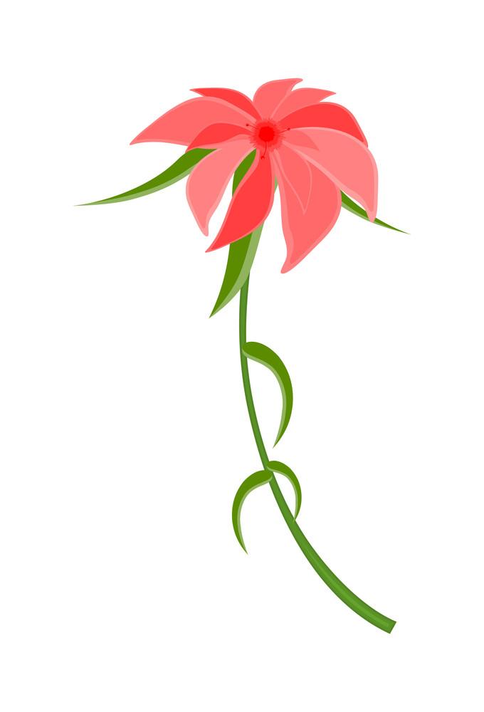 Pink Wildflower Vector