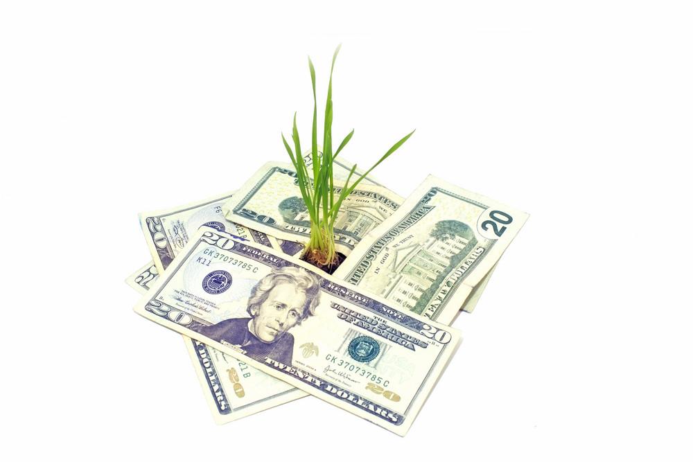 Plant In Money