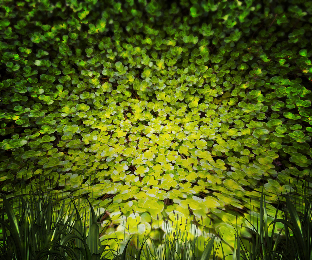 Plants Nature Background