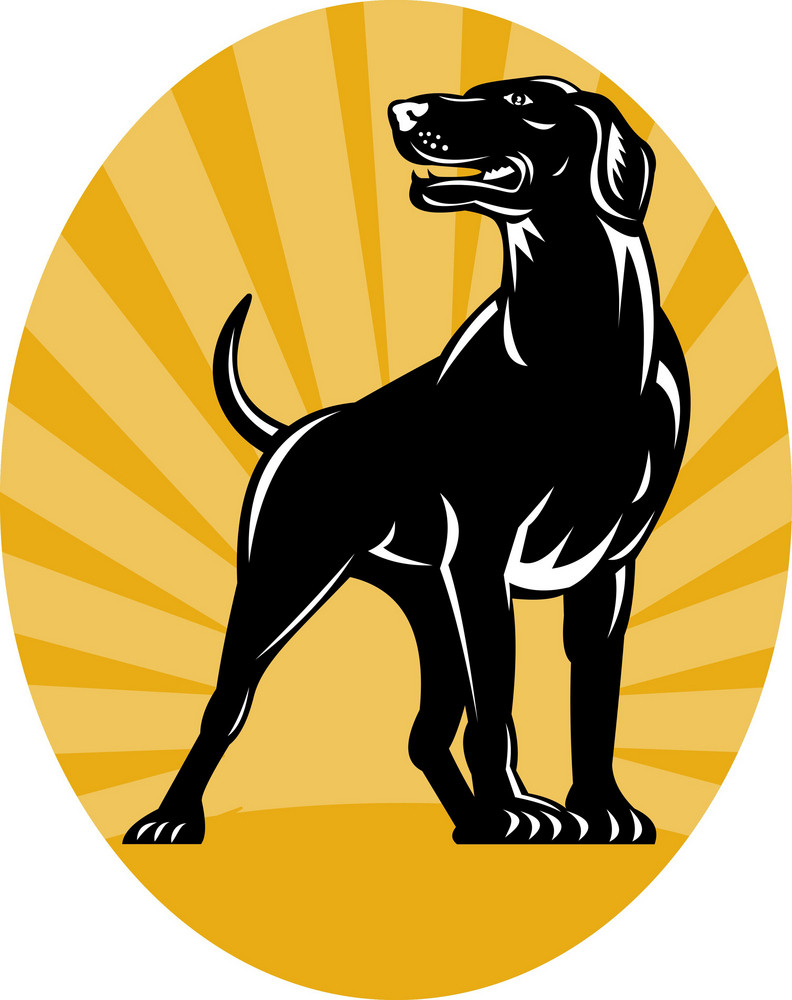 Pointer Dog With Sunburst Retro Style