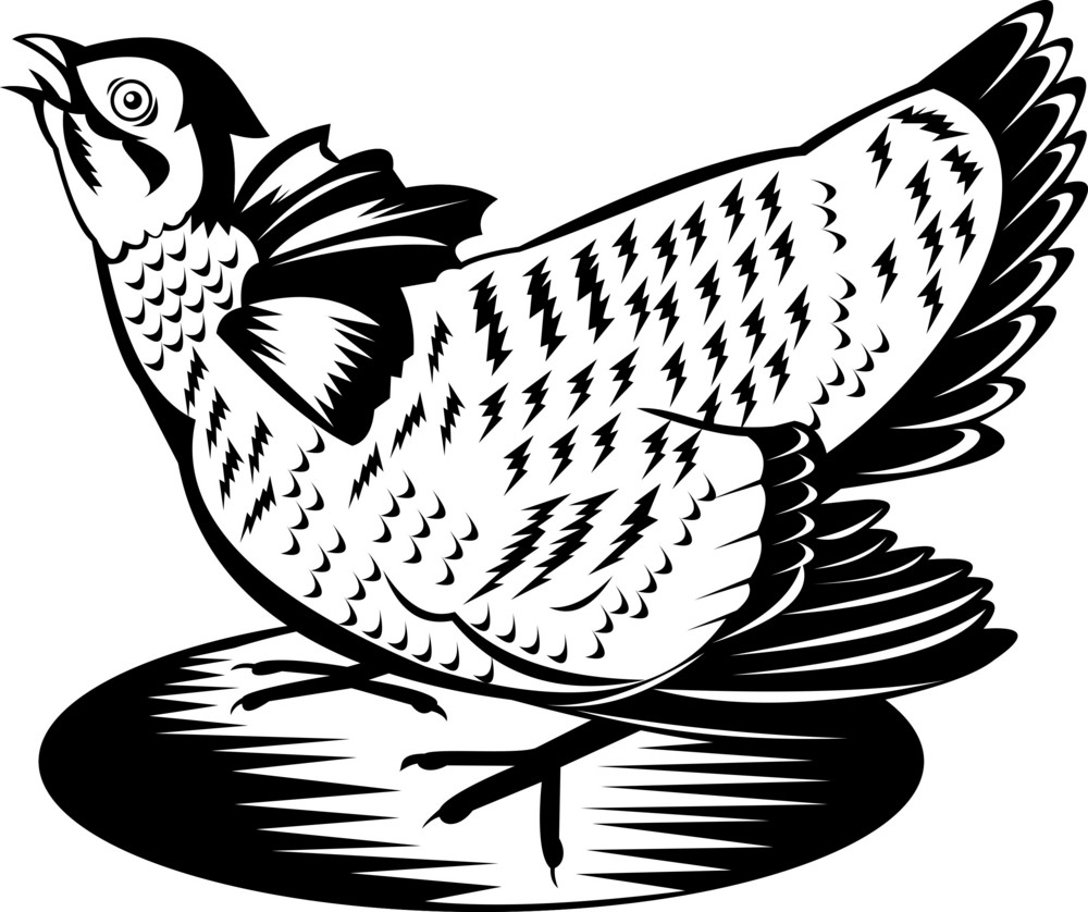 Prairie Chicken Hen Retro