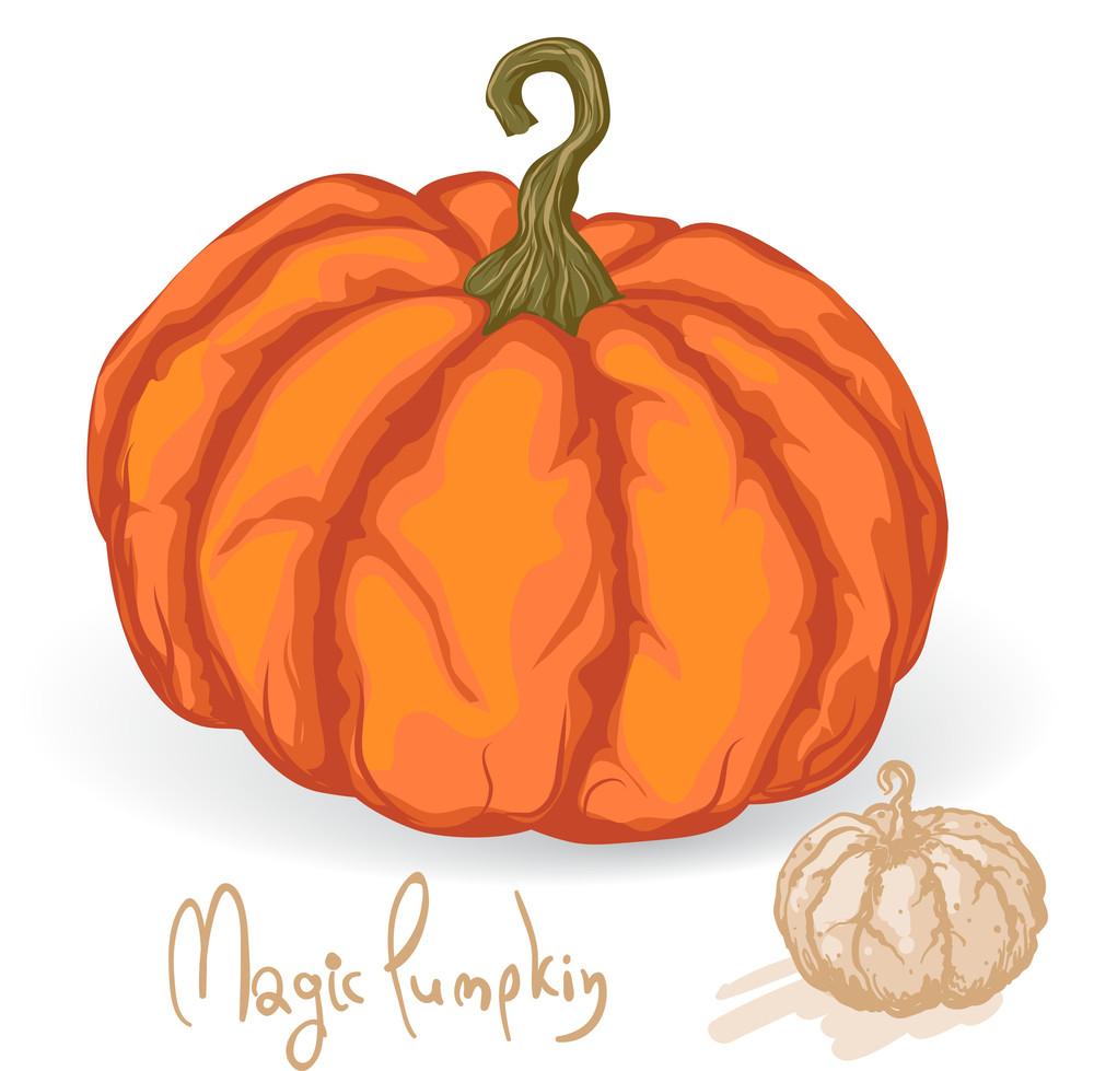 Pumpkin. Vector.