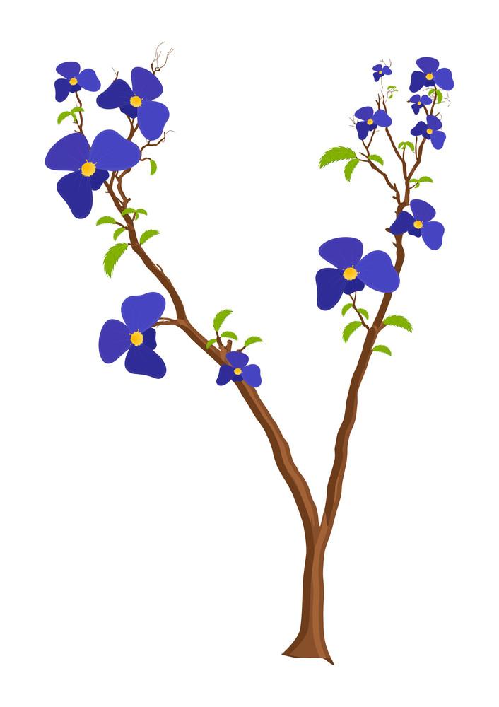Purple Flowers Plant
