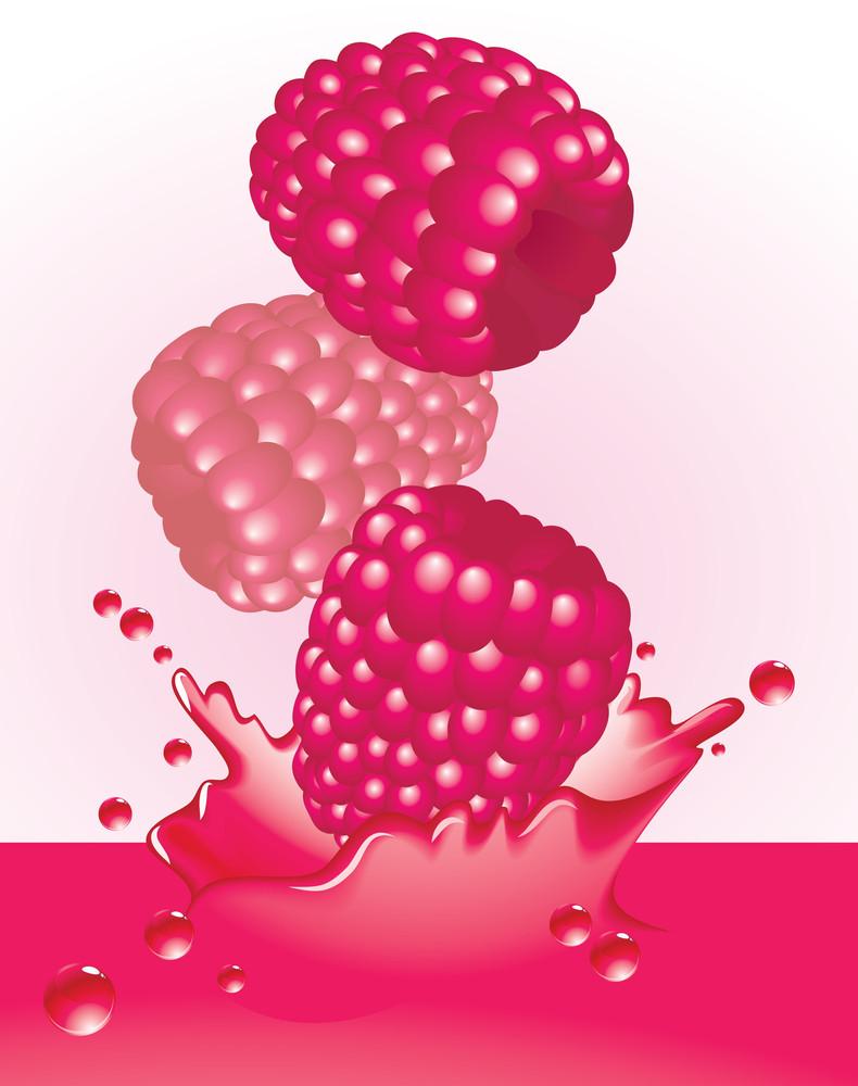 Raspberry Splash. Vector.