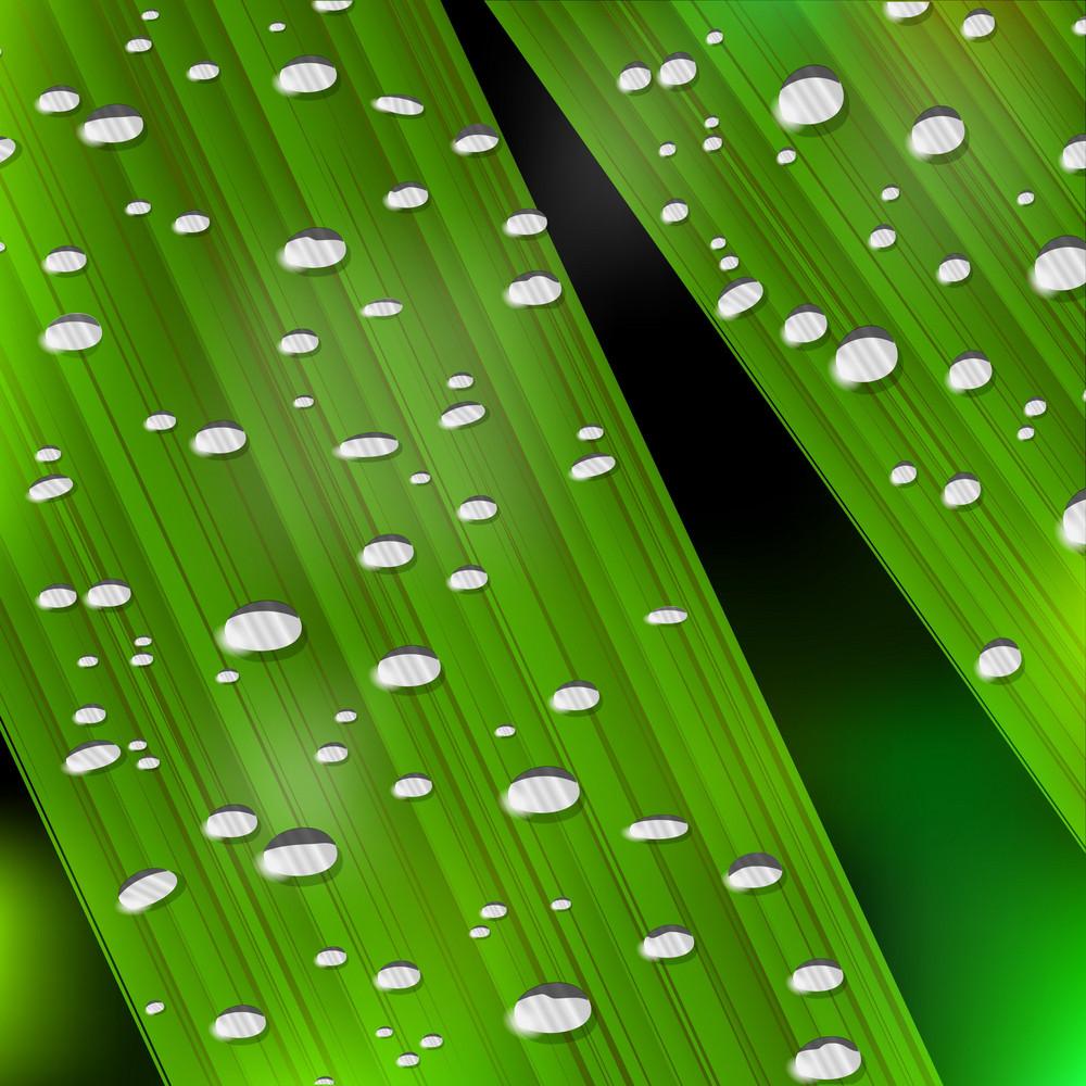 Realistic  Green Plant