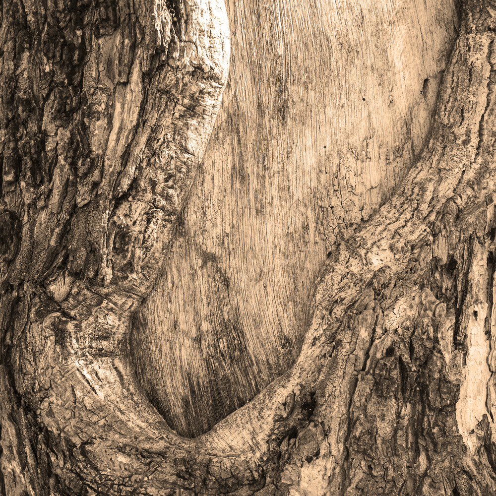 Realistic wood tree texture