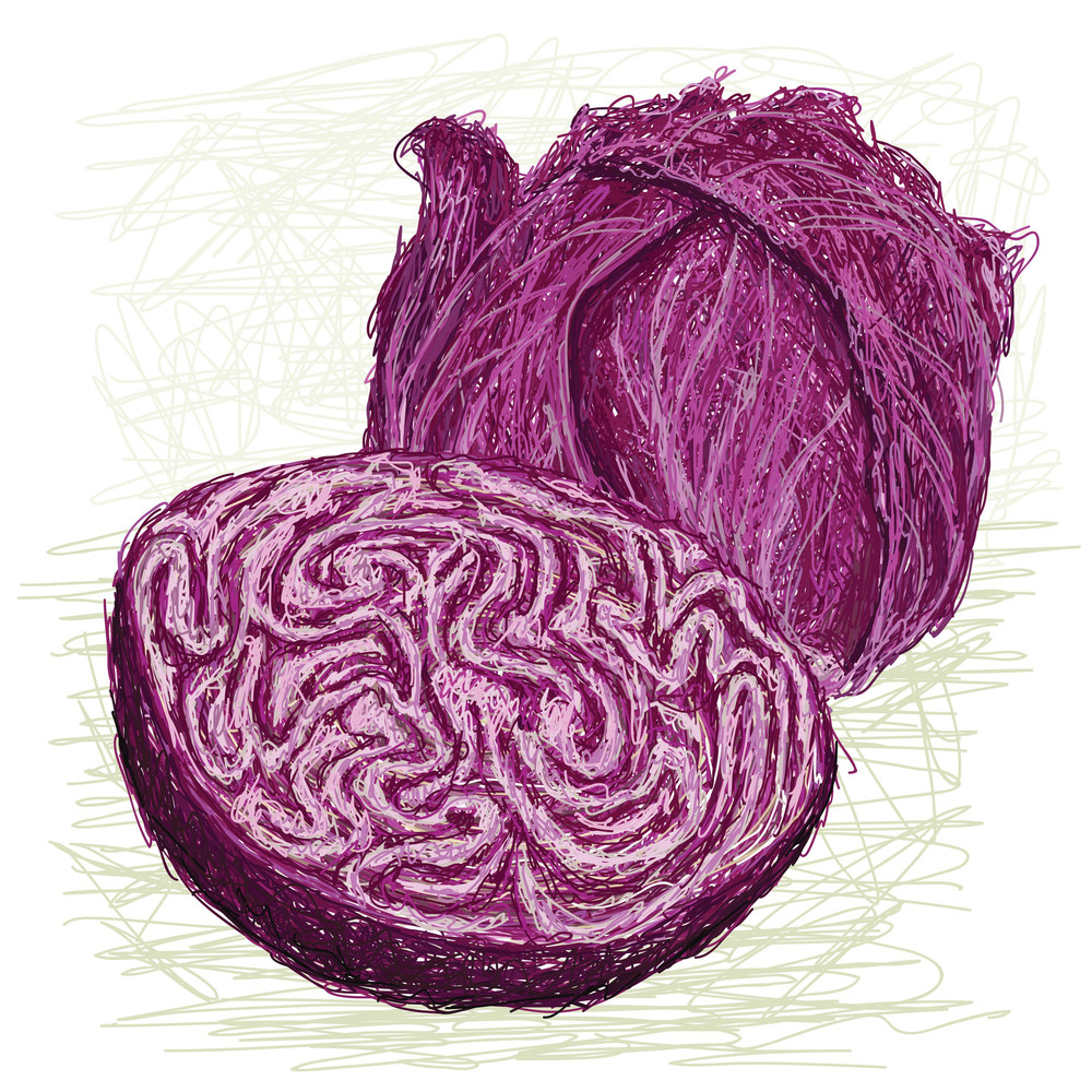 Red Cabbage Cross Section