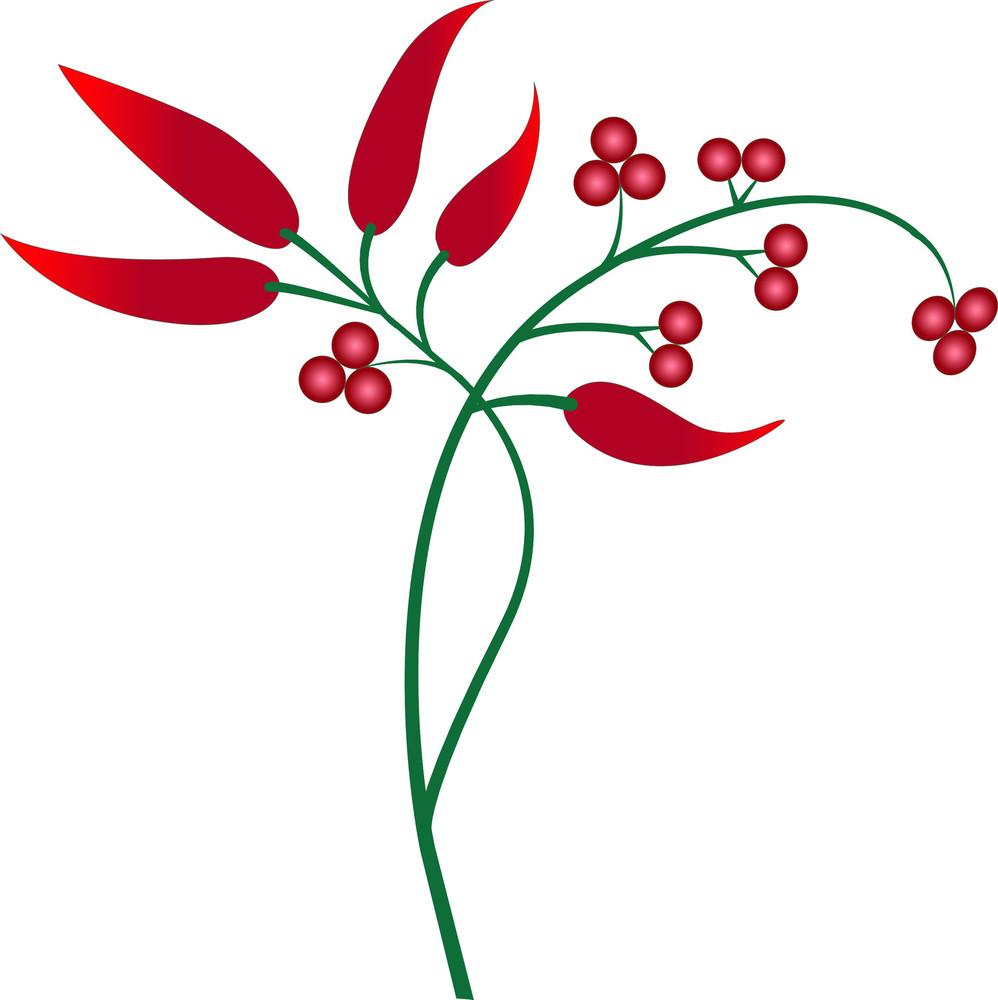 Red Chili Plant