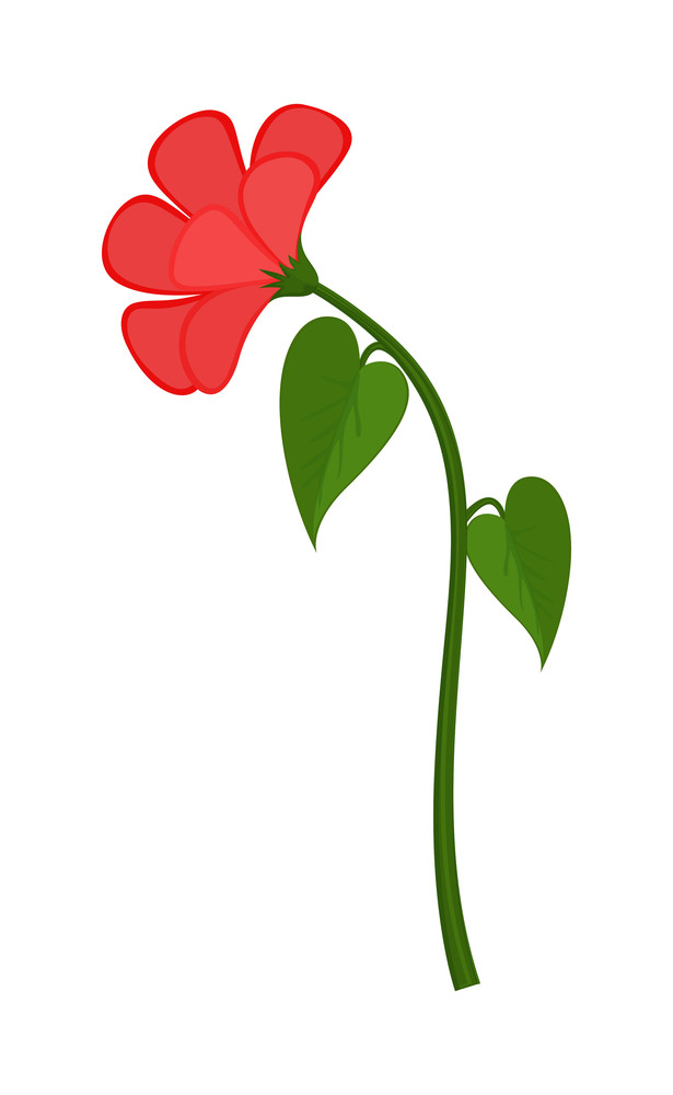 Red Flower Plant