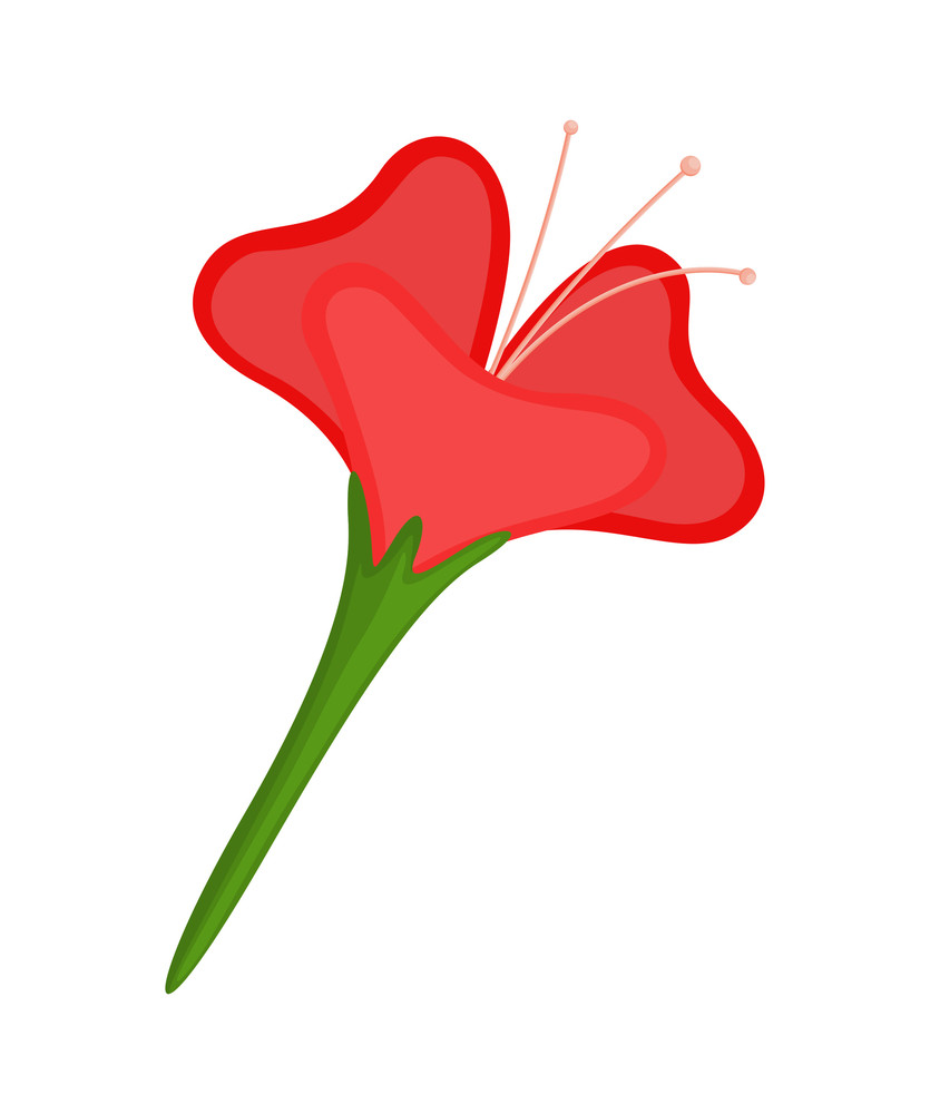 Red Flower Vector Isolated