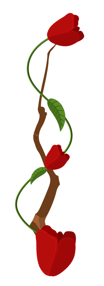 Red Roses Branch