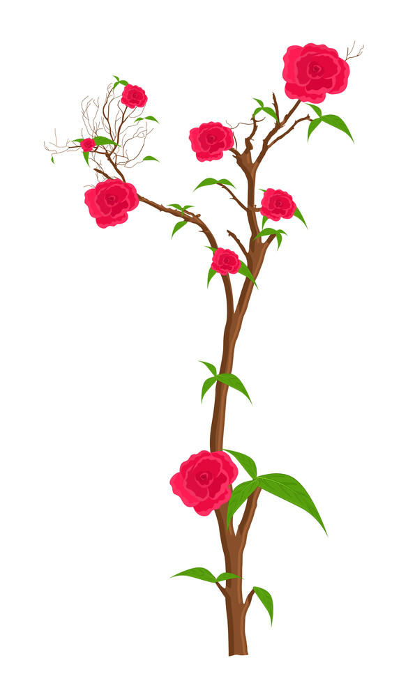 Red Roses Plant