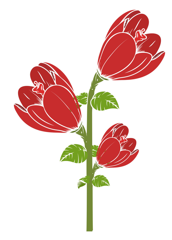 Red Tulip Flowers Branch