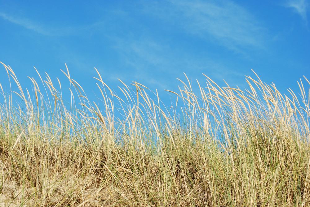 Reed Grass Background On A Tropical Beach