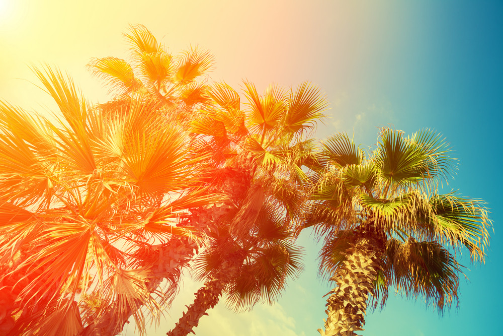 retro palm trees against sky at sunset royalty free stock image