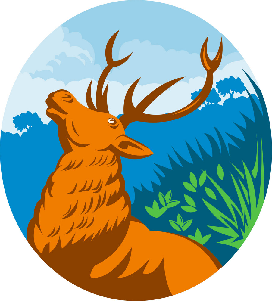 Roaring Red Stag Deer With Forest