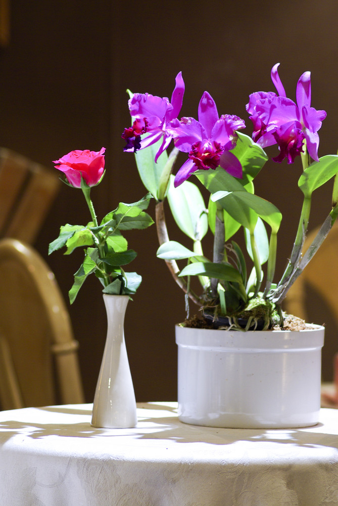 Rose and Orchid in white vase
