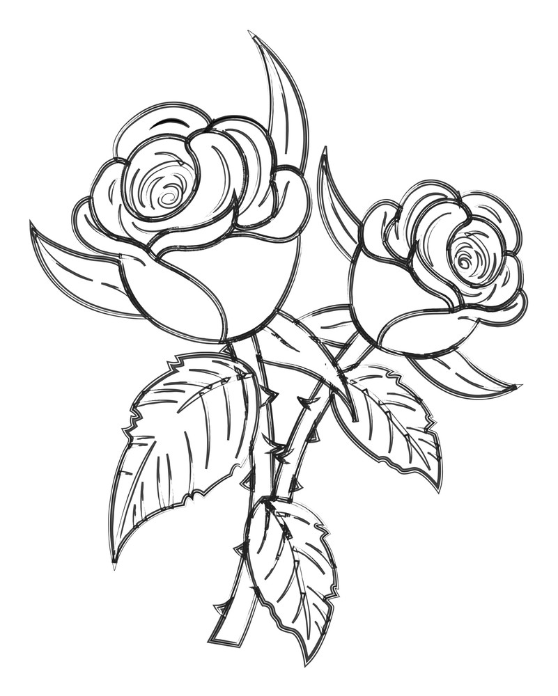 Roses Vector Drawing