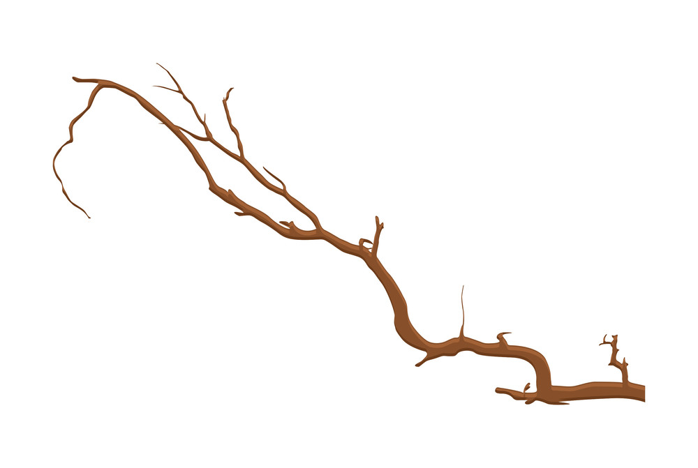 Rough Old Tree Branch