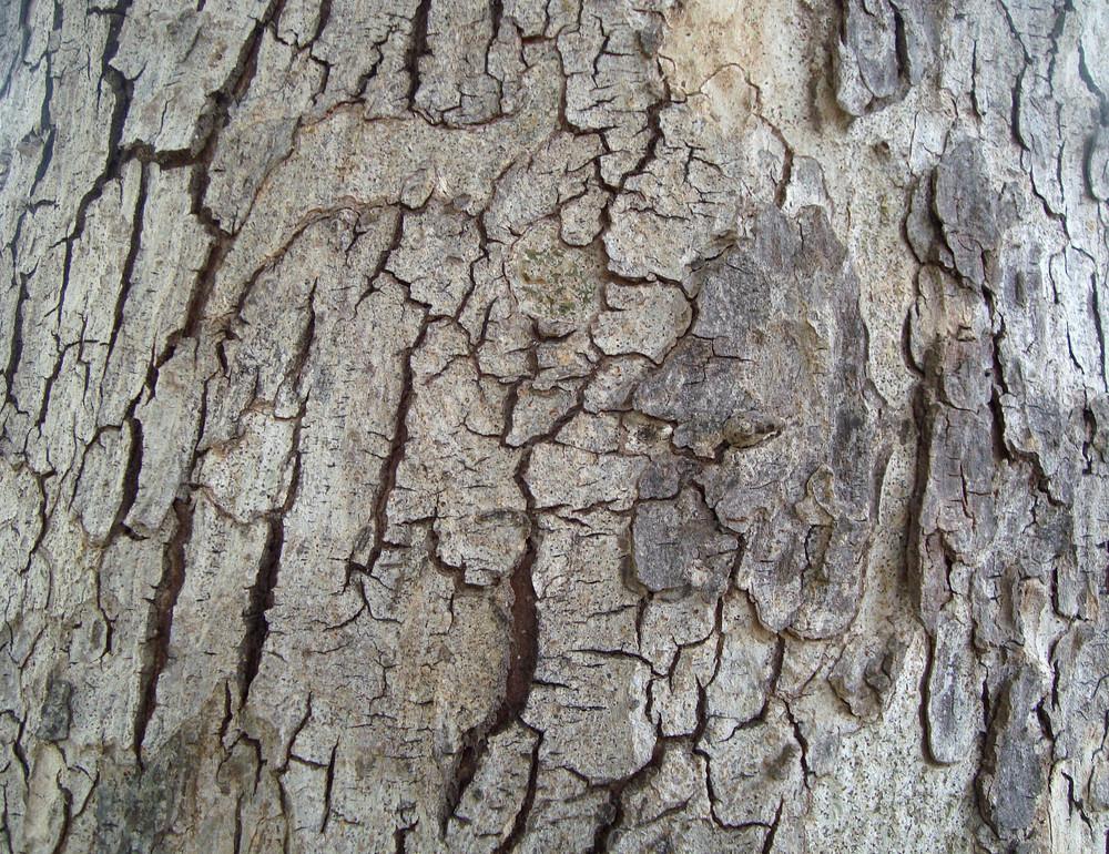 Rough_bark_wood_texture