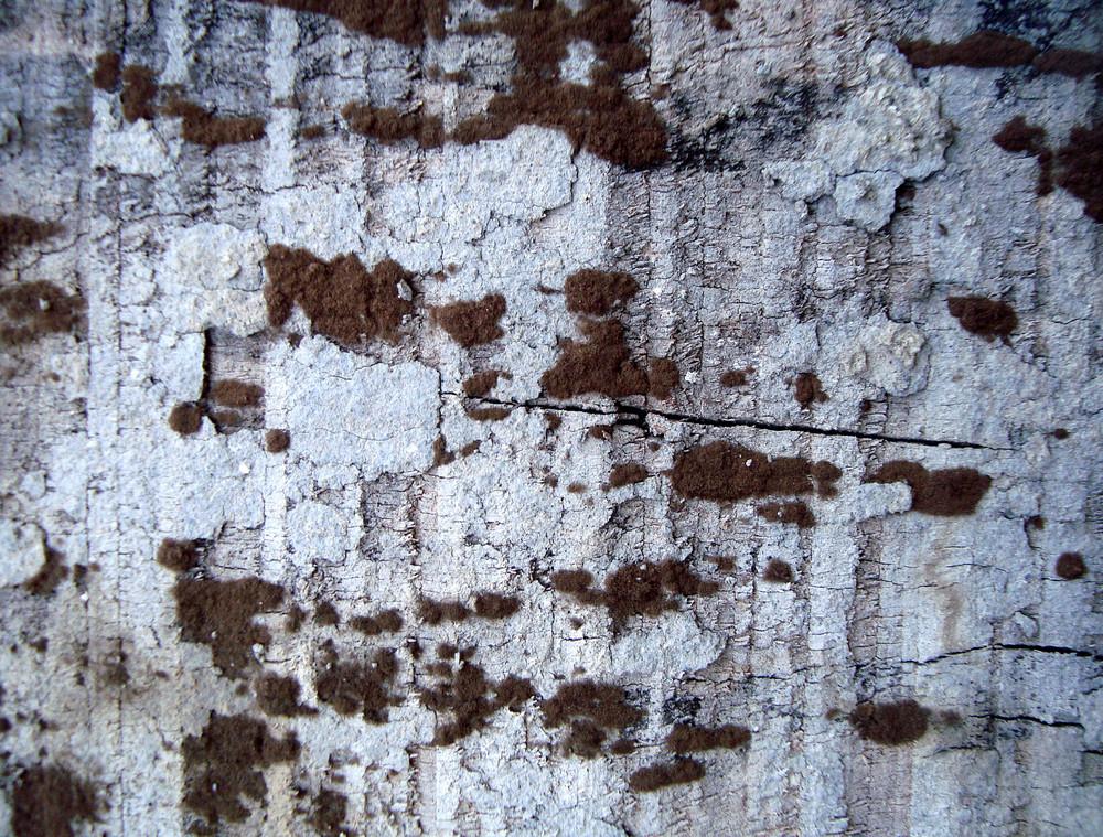 Rough_wooden_texture