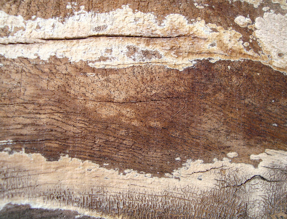 Royalty_free_grunge_wooden_texture