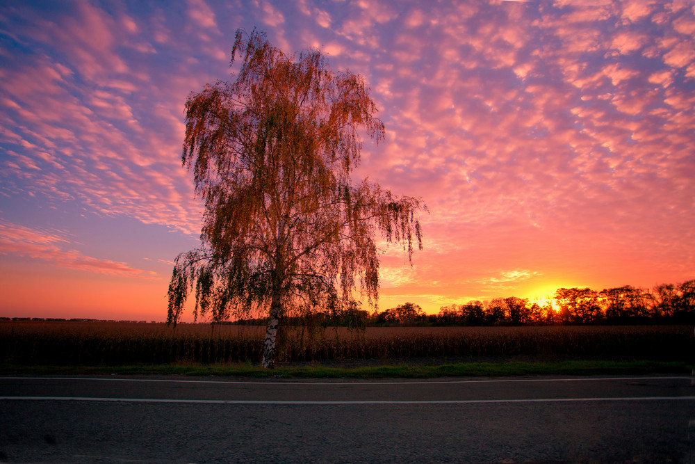 Rural landscape with cornfield and road at sunset