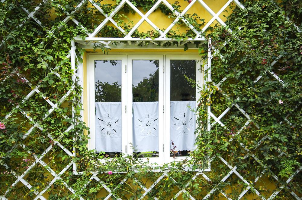 rural window framed by tree