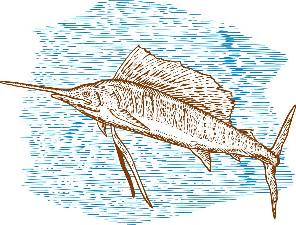Sailfish Fish Jumping Sketch