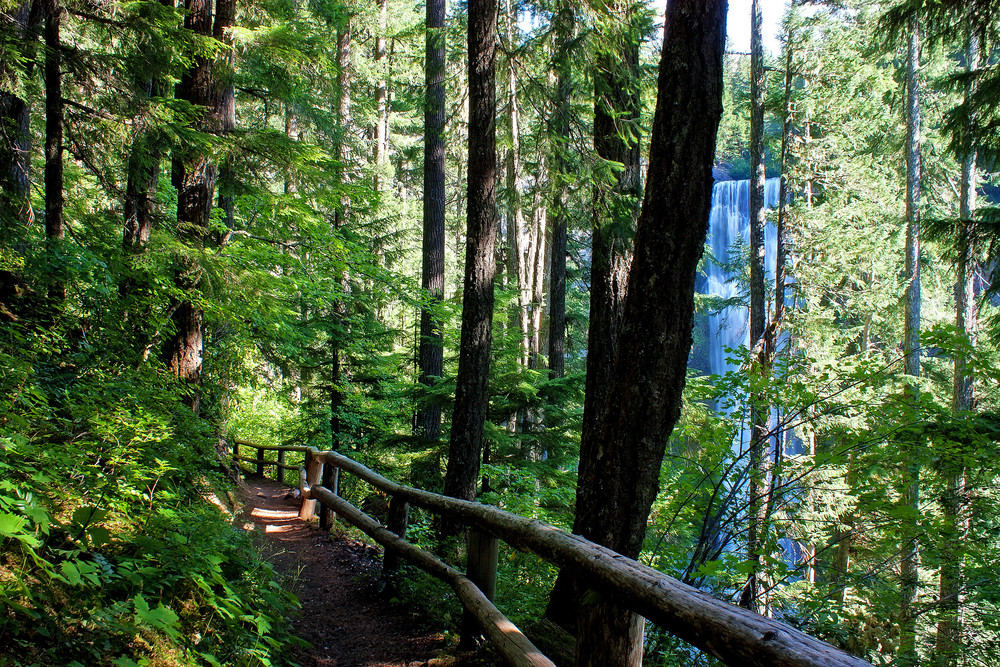 Salt Creek Falls Trail