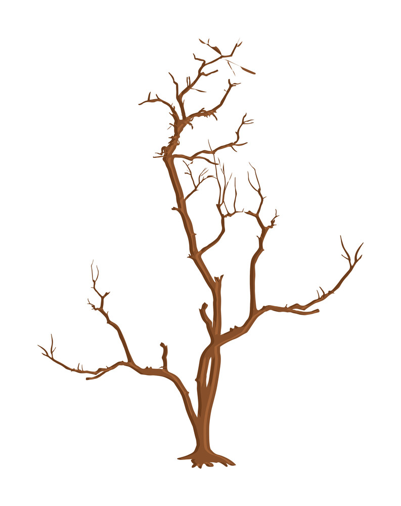 Scary Dead Tree Branches