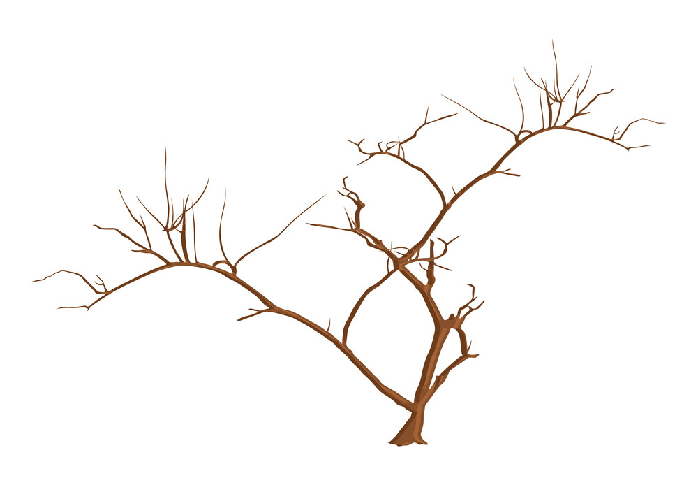 Scary Tree Branches