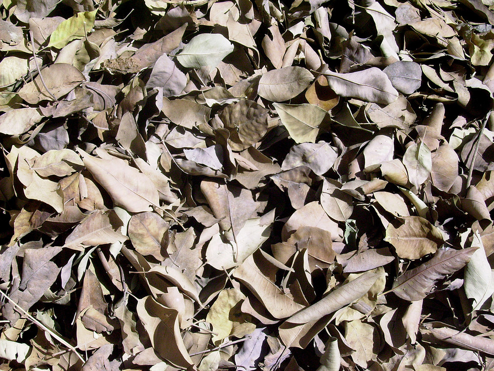 Scattered_dry_leaves_on_ground_background