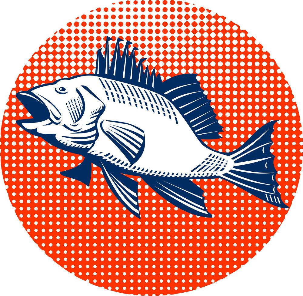 Sea Bass Retro