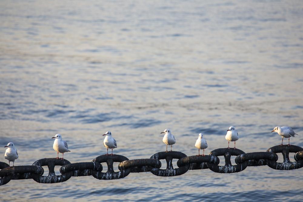 Seagull on Yokohama port