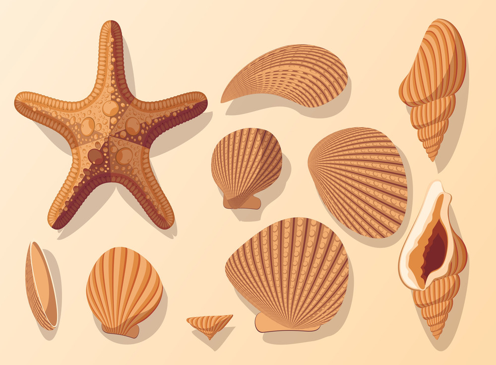 Seamless Shells. Vector.