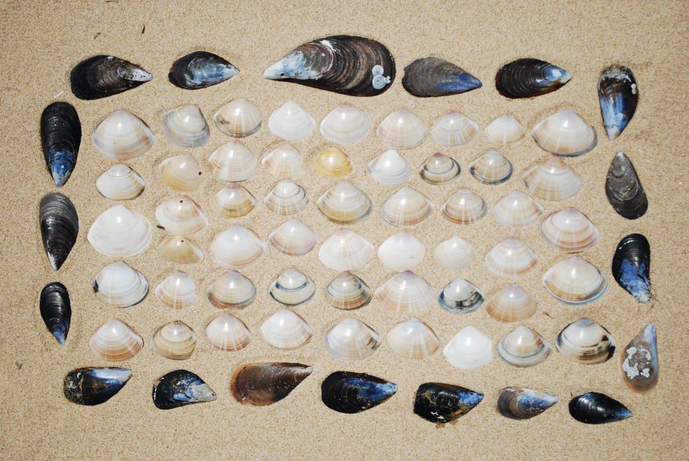 Seashells Background On Sand
