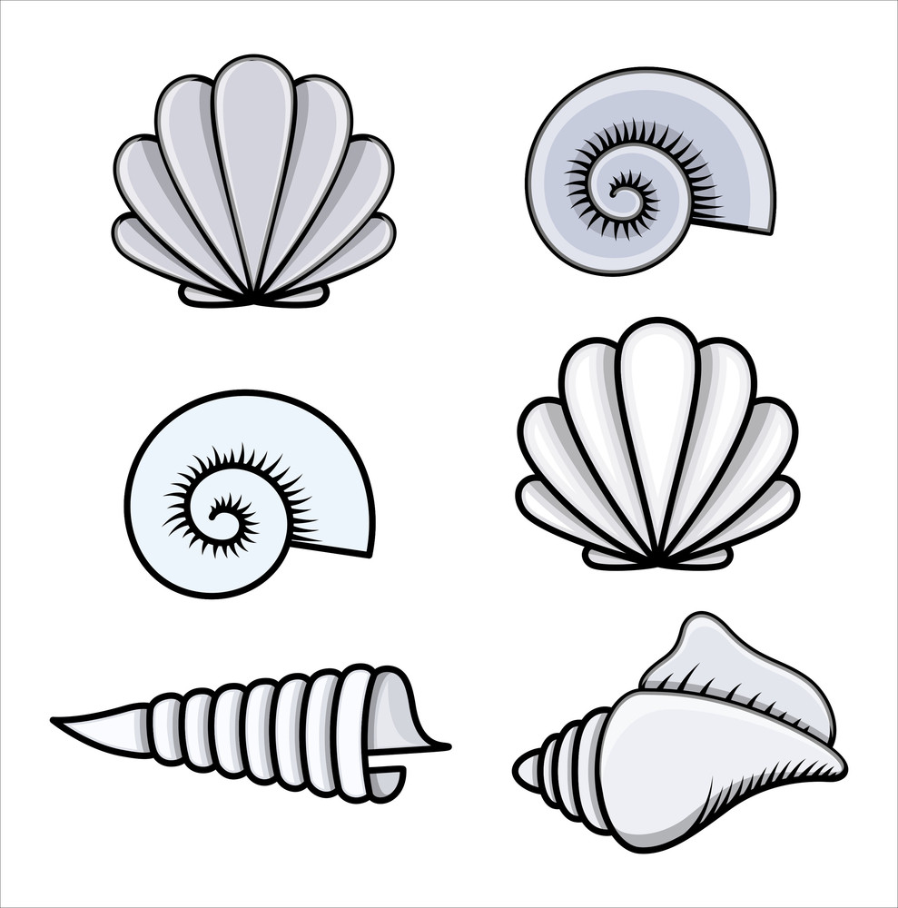 Animated Pictures Of Seashells seashells - cartoon vector illustration royalty-free stock