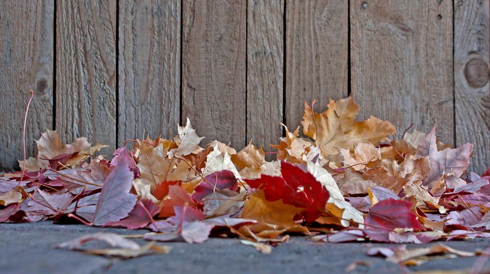 Seasons Fall Leaves Against Fence