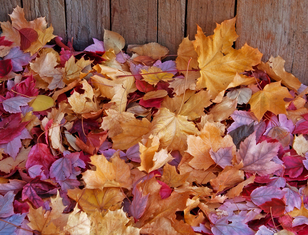 Seasons Fall Leaves Background